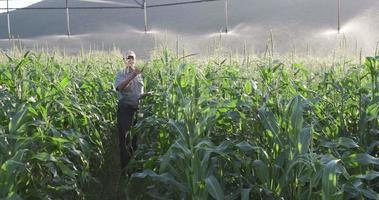 agricultor que usa tableros digitales e inspecciona el campo de maíz irrigado