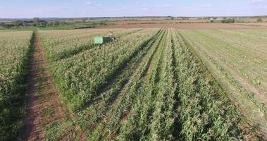Vista aérea de vastos campos de maíz y tractor cosechando maíz