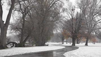 tempête de neige au parc public