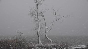 tempestade de neve cobrindo árvore perto do lago video