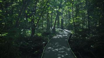 Video 4k de naturaleza pacífica en Ontario, Canadá