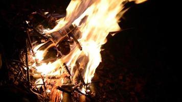 línguas de fogo, isoladas sobre o preto video