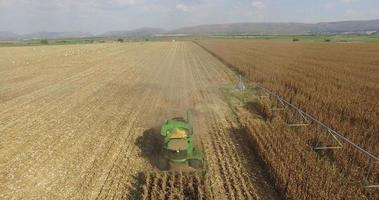 4K aerial view of combine harvester harvesting a corn field
