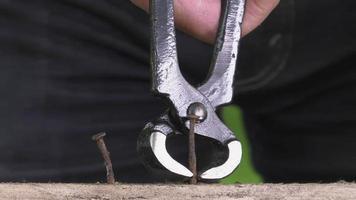 tirando la punta di un falegname con le pinze