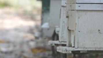 Colmena de abejas artificial en granja de abejas