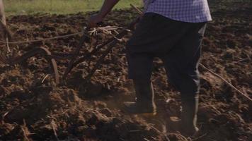 3-Mann-Landwirt, der Land kultiviert, das den Boden mit Ochsen pflügt video