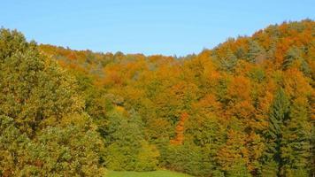 Antenna 4K: sollevamento sopra alberi colorati in autunno
