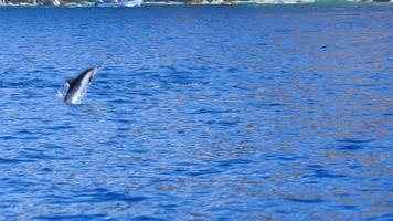 Dolphins jumping up out of the ocean video