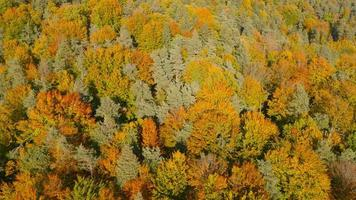 4K Aerial: Side View of Colorful Tree Tops Autumn video