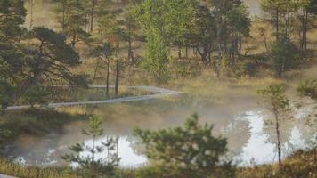 dimma som stiger från en damm i ett träsk under soluppgång
