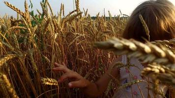 Little girl sneaks through a dense and high wheat. Wheat born a very good. Wheat is ripe. Soon it will begin harvesting.