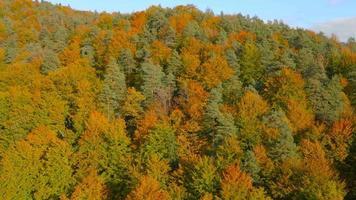 Antenna 4K: sopra le cime degli alberi in autunno