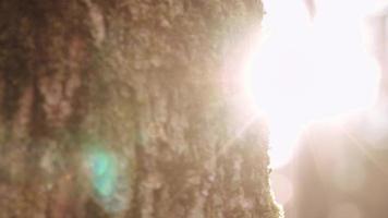 pezzo di albero alla luce del sole