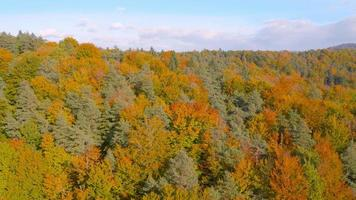 Antenna 4K: vista posteriore sopra l'autunno foresta colorata