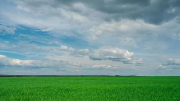 green field and cloudy sky beautiful clouds floating over green bright sky beautiful landscape, timelapse expressive freedom serenity sky beautiful clouds, bright juicy green grass video