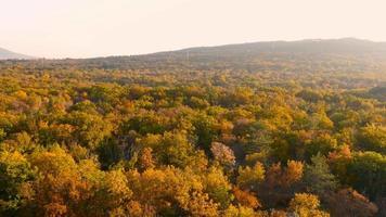 Antenna 4K: foresta colorata autunno sul tramonto