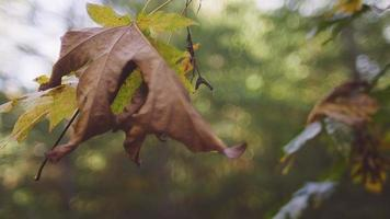 Autumn leaves on a branch, slow motion, with beautiful bokeh video