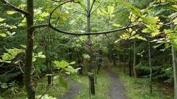 rama de árbol de otoño temprano