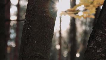 tronco d'albero in autunno