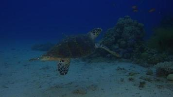 tortuga marina video
