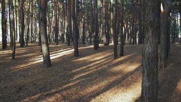 el movimiento en el bosque entre árboles contra el sol
