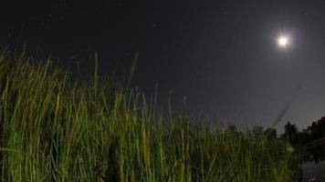 herbe près du front de mer à redding, ca la nuit: time lapse video