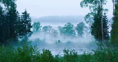 lapso de tiempo de niebla saliendo de un estanque del bosque video
