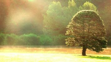 névoa da manhã de outono e árvores. uhd video