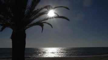 4K Beautiful Sun Ray Palm Tree Leaf Sunset Sunrise Romantic Beach video