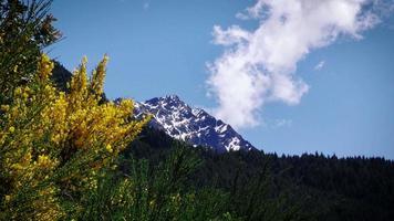 Nueva Zelanda prístina en primavera. tiro ajustado. video