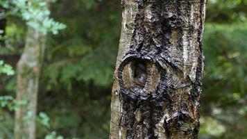 tronco d'albero dettagliato