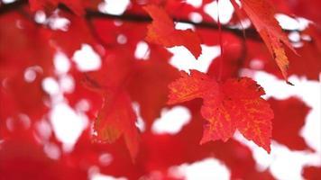 hojas rojas en otoño soplando en el viento alto departamento de campo video