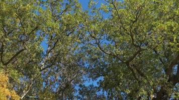 lussureggiante corona di alberi contro il cielo blu