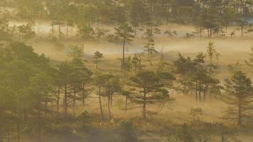 névoa subindo de uma floresta pantanosa