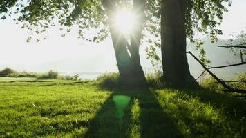 telecamera stabilizzata ronin in movimento verso il fiume, i raggi del sole provenienti dagli alberi