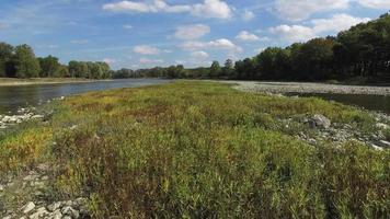 telecamera che si muove lentamente sulle piante in mezzo al fiume, scena pacifica