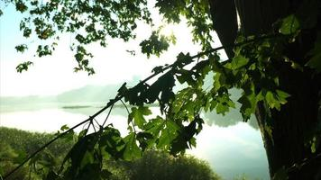 fiume nebbioso visto attraverso le foglie degli alberi durante l'alba