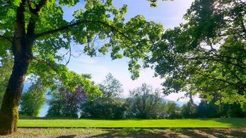 parque da cidade verde, paisagem de floresta urbana video