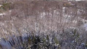 Snow Covered Forest after blizzard, treetop aerial view