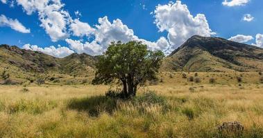 Nahaufnahme Baum im Feld mit Bergen Zeitraffer