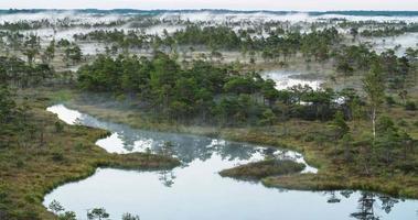 lapso de tempo de névoa subindo de uma floresta pantanosa