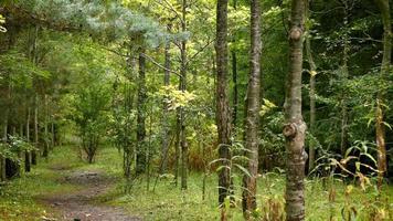 sentiero forestale dritto