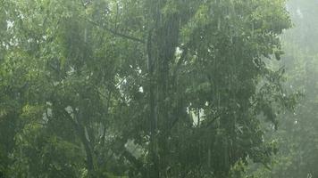 Summer rain showers, heavy rainstorm in summer season video