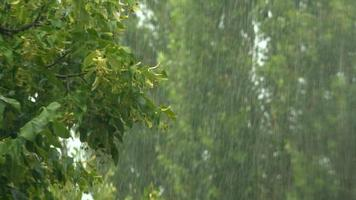 aguaceiros de verão, forte tempestade no verão