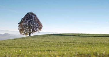 foto ampla de uma árvore solitária em uma paisagem idílica (4k)