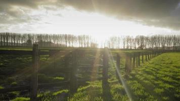 Flandes en el campo de Bélgica