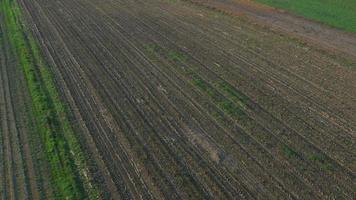 Antenna 4K: paesaggio agricolo in autunno