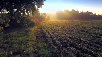 manhã mágica sobre campo enevoado de soja, agricultura rural