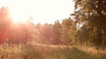 naturaleza y sol. video