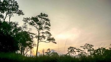 nascer do sol na floresta profunda video